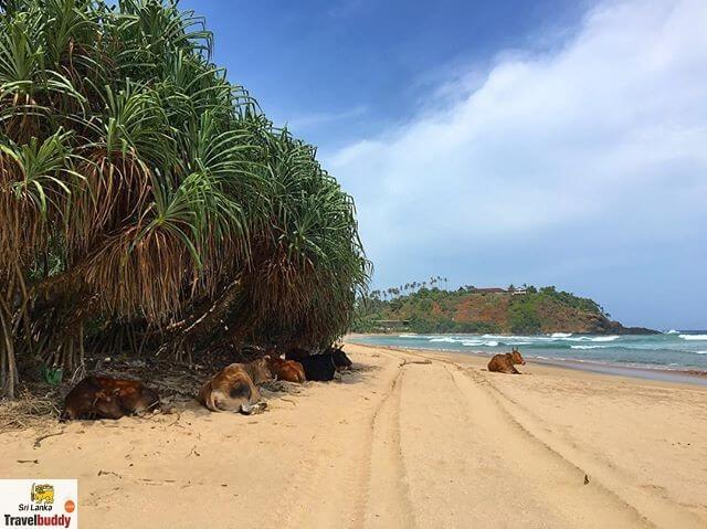 Talalla Beach guide