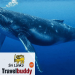 Top 7 Snorkeling Places in Sri Lanka – Guide for Tourist